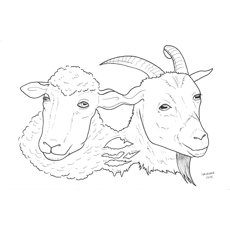 2015: Year of the Goat or Sheep