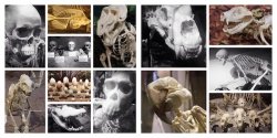 Largest Skeleton Museum in the country